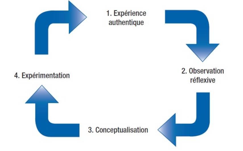Cycle de l'apprentissage expérientiel (Kolb, 1984)